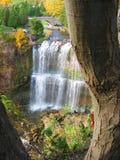 Dalingen met boom Stock Foto