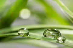 Dalingen met groen gras Royalty-vrije Stock Foto's