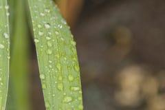 Dalingen na regen op de bladeren Royalty-vrije Stock Fotografie