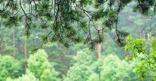 Dalingen op bont-boom takken Stock Afbeeldingen
