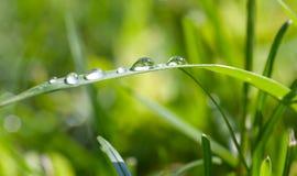 Dalingen op gras Royalty-vrije Stock Foto