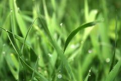 Dalingen op het gras Stock Afbeelding