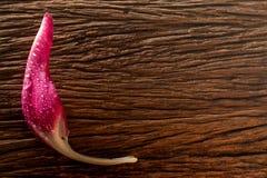 Dalingen op roze bloemblaadje op het hout Royalty-vrije Stock Fotografie