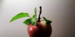 Dalingen op sappige appel met bladeren op de steelstudio Stock Foto
