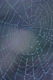 Dalingen op spinneweb Stock Afbeelding