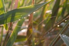 Dalingen van dauw op een groen gras Stock Afbeelding