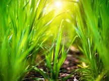 Dalingen van dauw op een groen gras Selectieve nadruk Royalty-vrije Stock Afbeeldingen