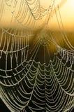 Dalingen van dauw op een spinneweb Royalty-vrije Stock Afbeeldingen