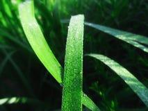 Dalingen van dauw op het gras Royalty-vrije Stock Foto's