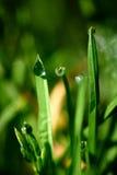 Dalingen van dauw op het groene gras Royalty-vrije Stock Foto