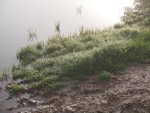 Dalingen van dauw op het jonge gras in de vroege de lenteochtend stock foto's