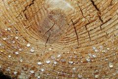 Dalingen van hars op de logboeken van de besnoeiingspijnboom Stock Foto