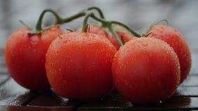 Dalingen van op rijpe tomaten Sluit omhoog stock videobeelden