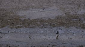 Dalingen van Regendaling aan de Bestrating die een Vulklei vormen stock footage