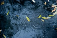 Dalingen van regenwater op een vers asfalt Stock Fotografie