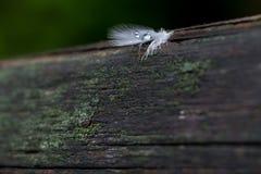 Dalingen van van regen op vogelveren Stock Afbeelding