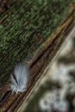 Dalingen van van regen op vogelveren Stock Foto's