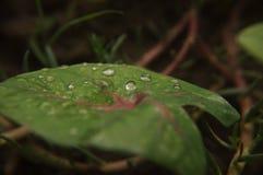 Dalingen van water op blad Royalty-vrije Stock Foto's