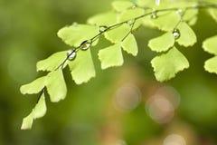 Dalingen van water op de bladeren Royalty-vrije Stock Foto