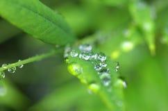 Dalingen van water op de bladeren Royalty-vrije Stock Afbeelding