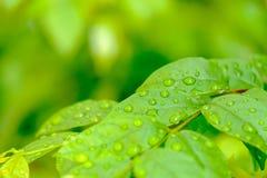 Dalingen van water op de bladeren, die door water worden veroorzaakt Royalty-vrije Stock Afbeelding
