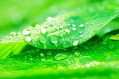 Dalingen van water op een groen blad Royalty-vrije Stock Afbeeldingen