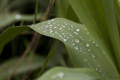 Dalingenwater op groene grote bladeren in daling Royalty-vrije Stock Afbeelding