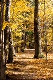 Dalings bosweg royalty-vrije stock foto