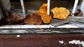 Dalings droge bladeren op retro houten vensterbank stock foto