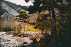 Dalings tiltshift landschap met bergen en bomen Royalty-vrije Stock Afbeelding