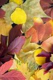 Dalingsachtergrond, textuur en patroon Kleurrijke de herfstbladeren die op grond leggen Mening van hierboven Achtergrond stock afbeelding