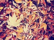 Dalingsbeeld van de grond wanneer de bladeren kleuren draaien Stock Foto