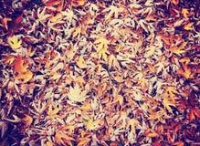 Dalingsbeeld van de grond wanneer de bladeren kleuren draaien Stock Afbeelding