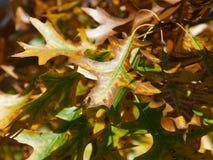 Dalingsbladeren Royalty-vrije Stock Foto