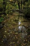 Dalingsbladeren die in de stroom nadenken Stock Foto