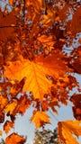Dalingsbladeren in zonlicht Royalty-vrije Stock Afbeeldingen