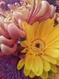Dalingsbloemen Stock Afbeeldingen