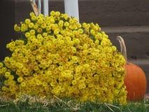 Dalingsbloemen en pompoen Royalty-vrije Stock Foto