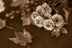 Dalingsbloemen in sepia Stock Afbeeldingen