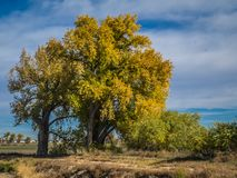 Dalingsbomen in oostelijk Colorado stock fotografie