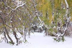 dalingsbomen in sneeuw worden behandeld die Stock Afbeelding