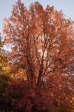 Dalingsboom Stock Afbeelding
