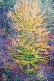 Dalingsboom Royalty-vrije Stock Afbeeldingen