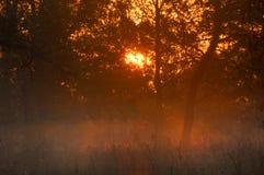 Dalingsbos, mist, ochtend, avond, heldere gele zon Zeldzame galant Stock Foto's