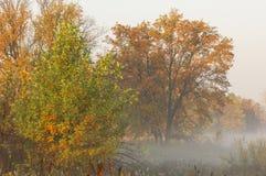 Dalingsbos, mist, ochtend, avond, heldere gele zon Zeldzame galant Stock Afbeelding