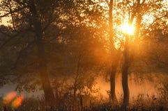 Dalingsbos, mist, ochtend, avond, heldere gele zon Zeldzame galant Royalty-vrije Stock Afbeelding