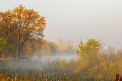 Dalingsbos, mist, ochtend, avond, heldere gele zon Zeldzame galant Stock Fotografie