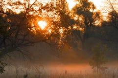 Dalingsbos, mist, ochtend, avond, heldere gele zon Zeldzame galant Royalty-vrije Stock Foto's