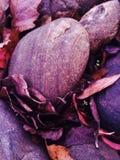 Dalingsfoto van bladeren en rotsen stock afbeeldingen