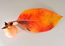 Dalingsfruit Stock Foto